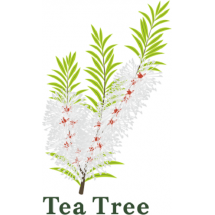 HOLA Tea Tree Oil Control - Очищающая серия с Чайным деревом