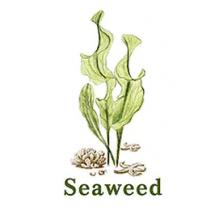 HOLA Seaweed Moisturising - Увлажняющая серия с Морскими водорослями